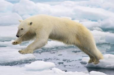 هشدار سازمان ملل درمورد افزایش بیسابقه مقدار گاز کربن