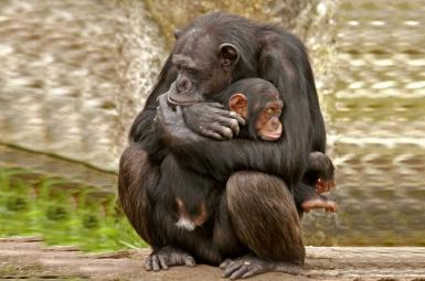 بچه بغل کردن پستانداران