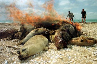 فُکهای مرده در سواحل دریای خزر (قزاقستان، سال ۲۰۰۰ میلادی)