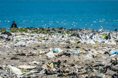 خطر تبدیل پلاستیک به غذای برخی ماهیها