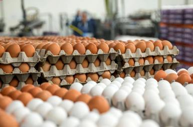 افزایش قیمت تخم مرغ در ایران