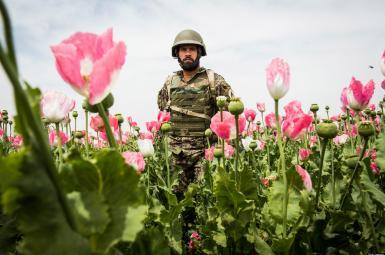 عملیات هوایی ناتو به کارگاههای تولید تریاک طالبان
