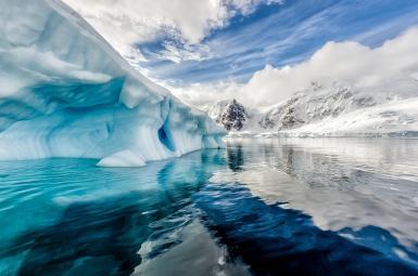 کشف فسیل ۲۸۰ میلیون ساله یک جنگل در قطب شمال