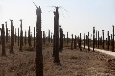 Parched palm groves in Iran's Khuzestan province. File