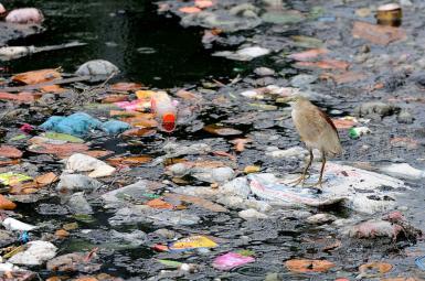 پیداشدن پلاستیک در شکم جانداران دریایی در عمیقترین آبهای جهان