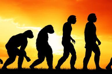 نظریه تکامل