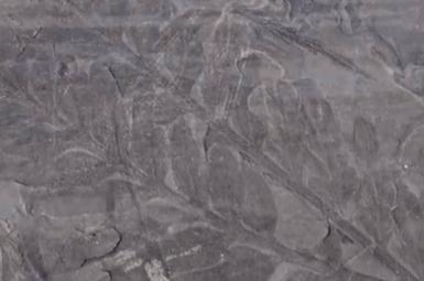 کشف فسیل 280 میلیون ساله یک جنگل در قطب شمال