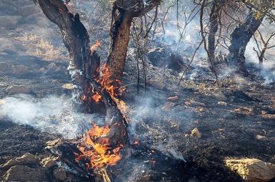 تلاش ۴۸ ساعته برای مهار آتش در جنگلهای باشت ادامه دارد