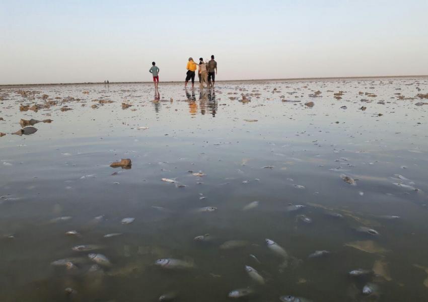 مرگ بچهماهیها در تالاب هامون