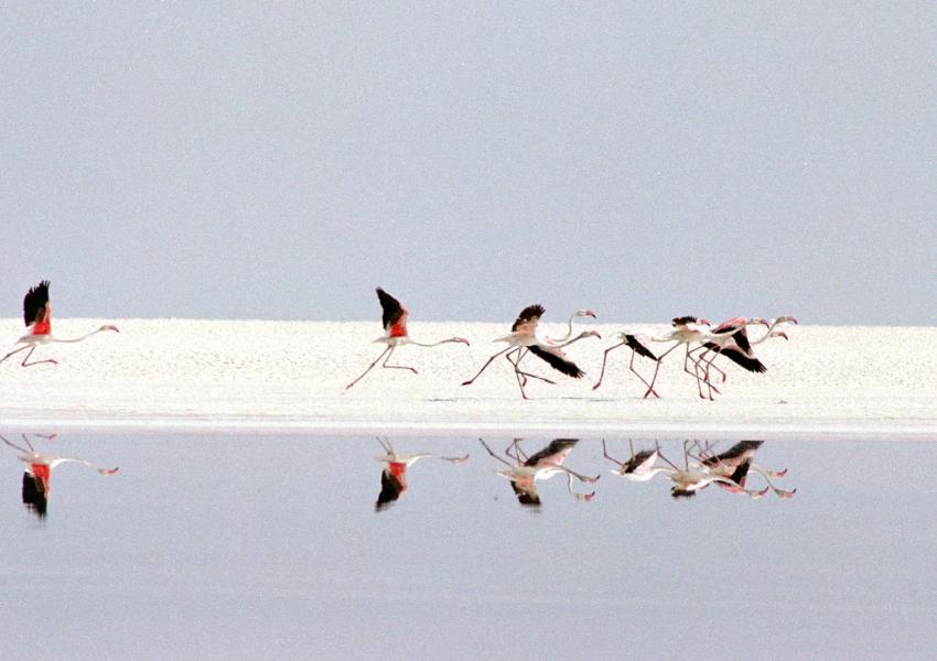 فلامینگوها در اطراف دریاچه نمک مهارلو (۲۰۰۱، رویترز)