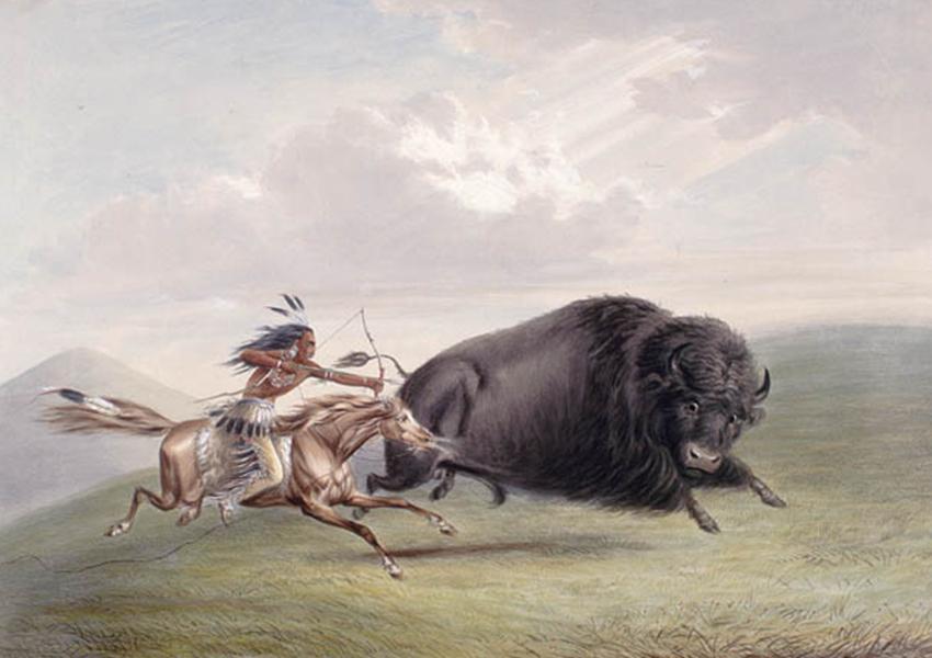 شکارچی بومی و بوفالو - تصویر از ویکیپدیا