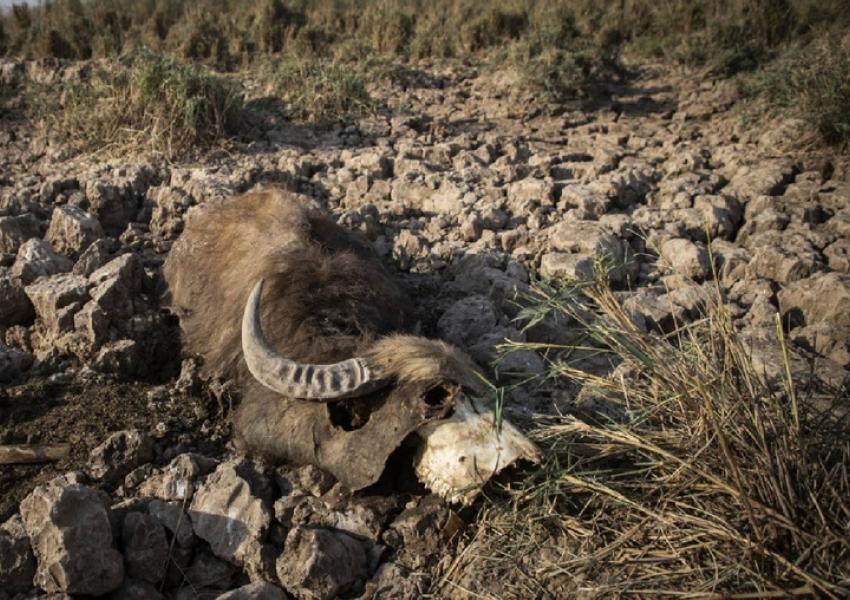 Hur Al Azim wetland in Iran drained for oil exploration. FILE