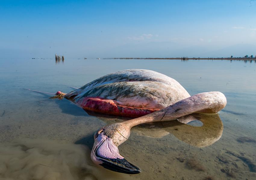 Kematian misterius burung-burung yang bermigrasi di Iran menyebar ke empat provinsi