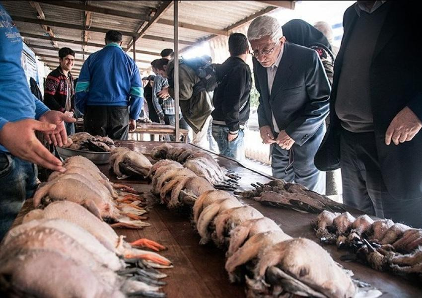 بازاز فروش پرندگان وحشی در فریدونکنار